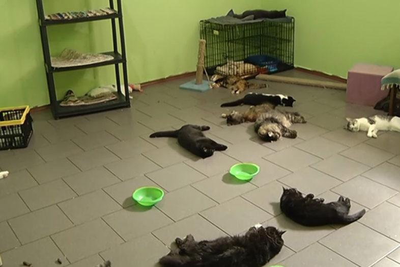 Кошки умерли от сероводорода в оренбурге orengrad