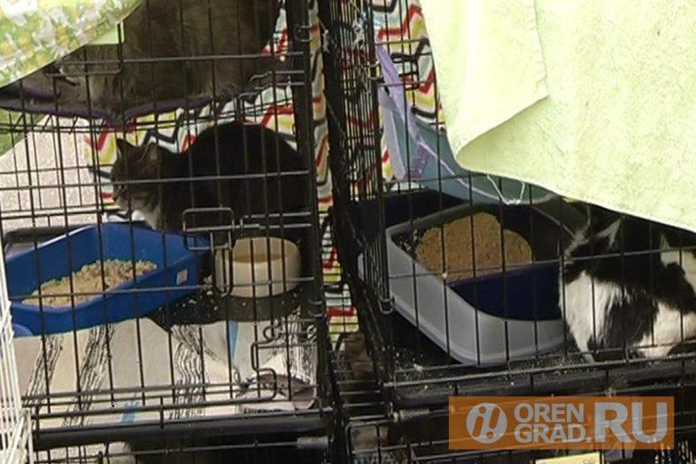 Кошкам новый дом. Оренбургский приют «Филимоша», в котором больше месяца назад погибло 65 кошек и одна собака, скоро вновь заработает