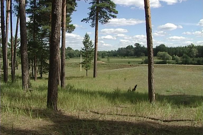 бузулукский бор лес 6