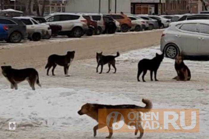 Челябинские депутаты внесли в Госдуму проект закона о регистрации домашних животных