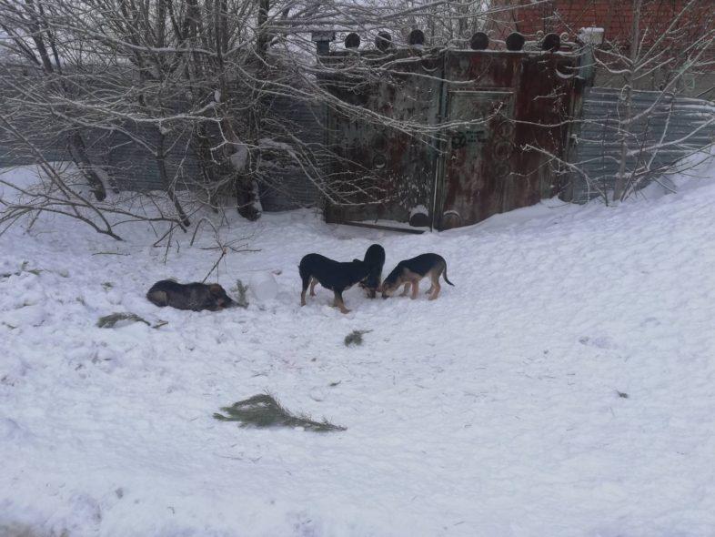 В Оренбурге на отлов бездомных собак в 2020 году денег нет