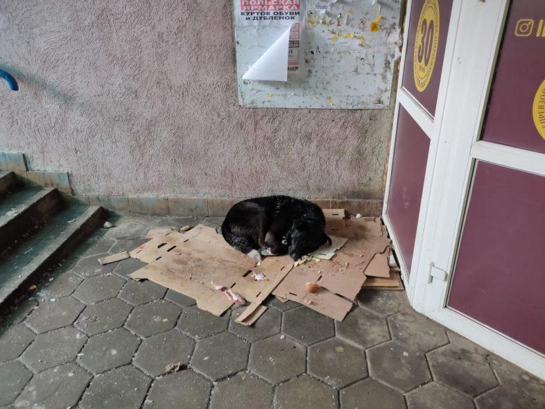 В Оренбурге жертвы бродячих собак ежедневно обращаются в травмпункты
