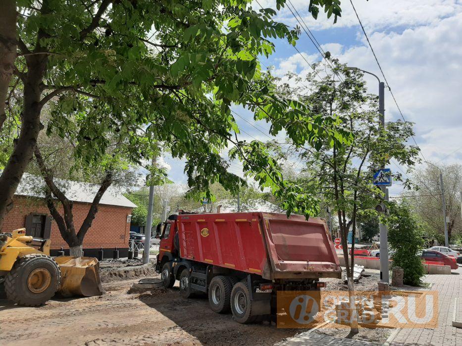 В Оренбурге из-за липового ажиотажа выкорчевывают деревья
