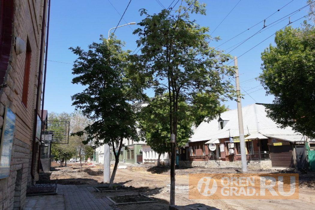 Согласны ли оренбуржцы с вырубкой деревьев в центре Оренбурга? Опрос