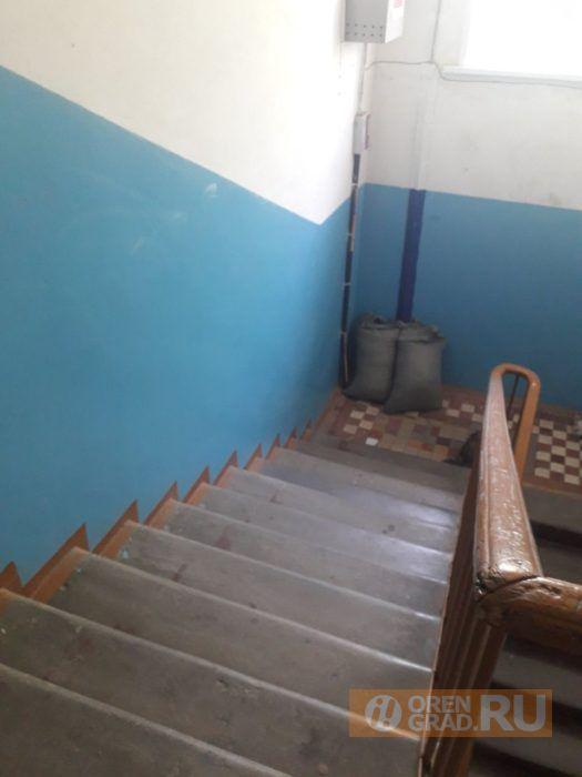 УК в Оренбурге месяц не может убрать из подъезда голубиный помёт
