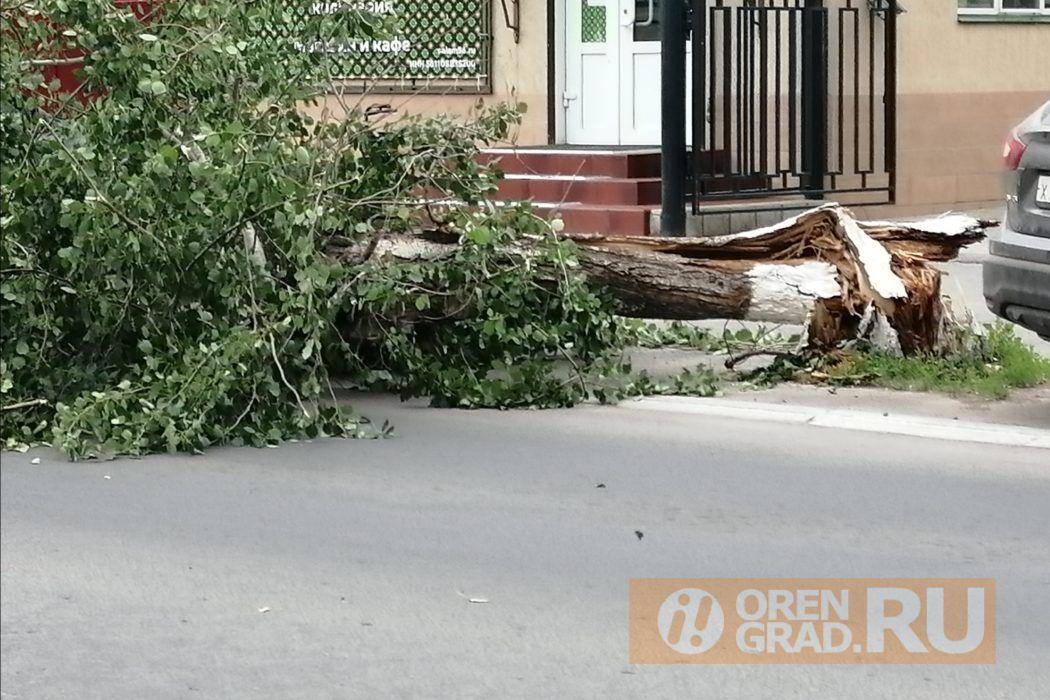 В центре Оренбурга упало дерево на проезжую часть