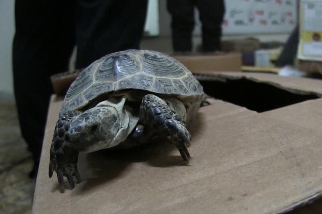 В Оренбурге дело о контрабанде черепах передали в суд