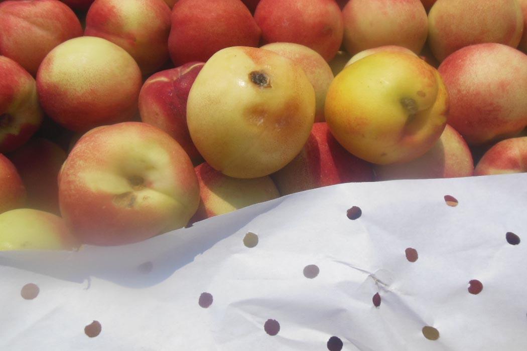 В Оренбуржье задержали 81 тонну фруктов с вредителями