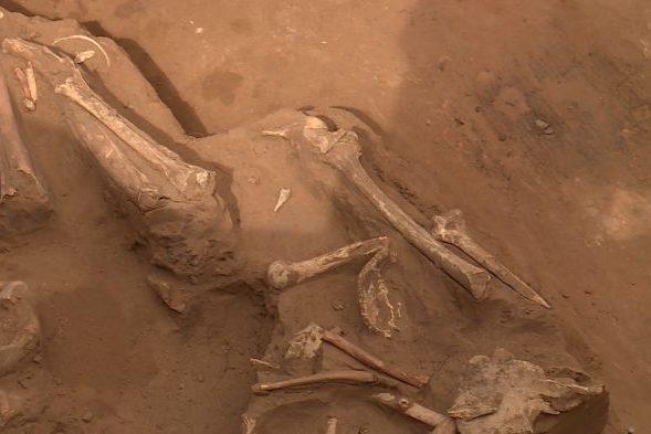 Оренбургские археологи раскопали захоронения, которым около 6000 лет