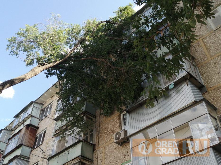 В Оренбурге сломанное дерево упало на жилой дом