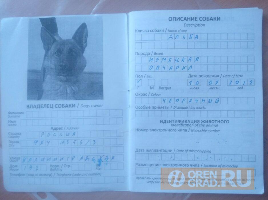 В Оренбурге служебная собака Альба нашла себе нового хозяина