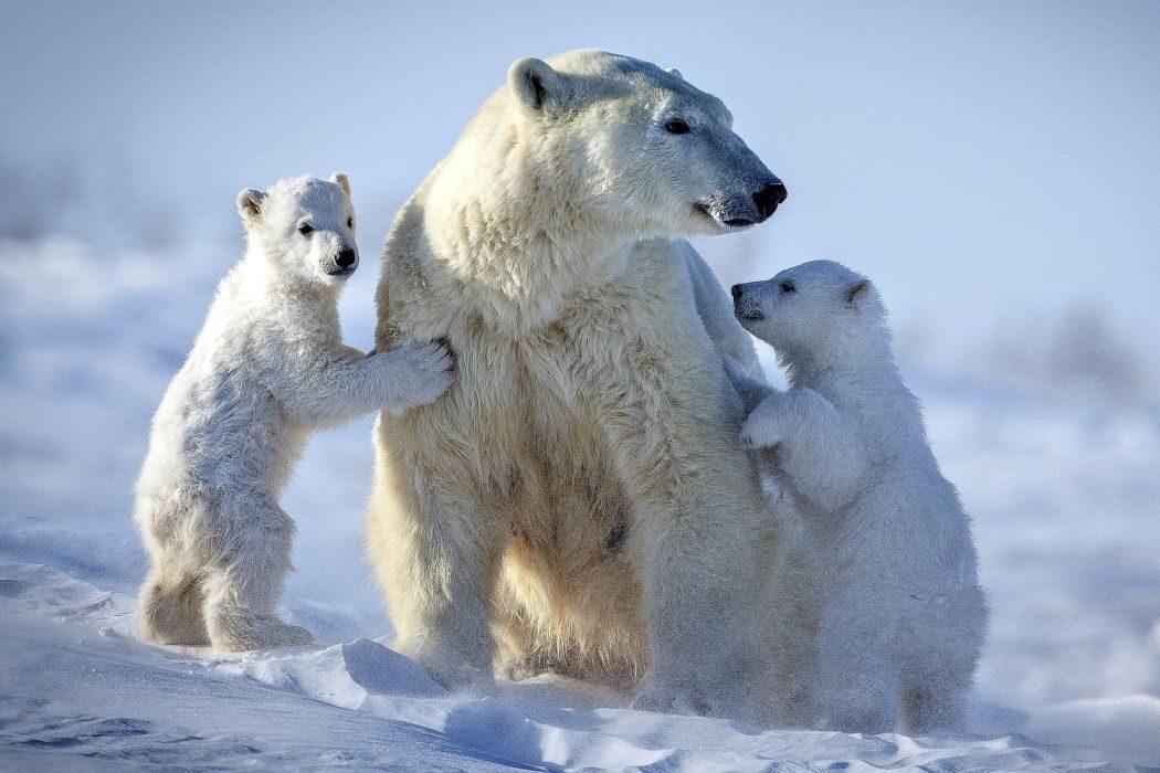 Полярный медведь, фестиваль прекрасного рождения, сахарин, туристический подводный аппарат и клонирование овечки. День в истории