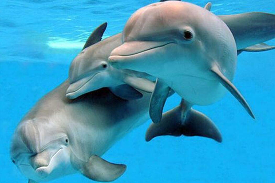 Защита морских млекопитающих, орнитолог, синоптическая карта, фонограф, «Труд» и фотошоп. День в истории