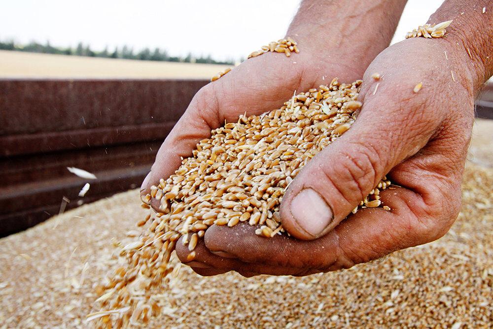 Ташлинский фермер лишился и зерна и денег