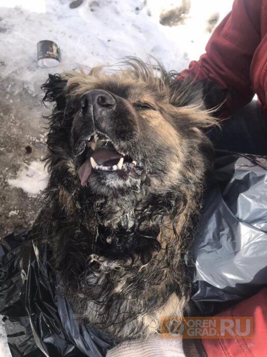 В Оренбурге началась охота на собак