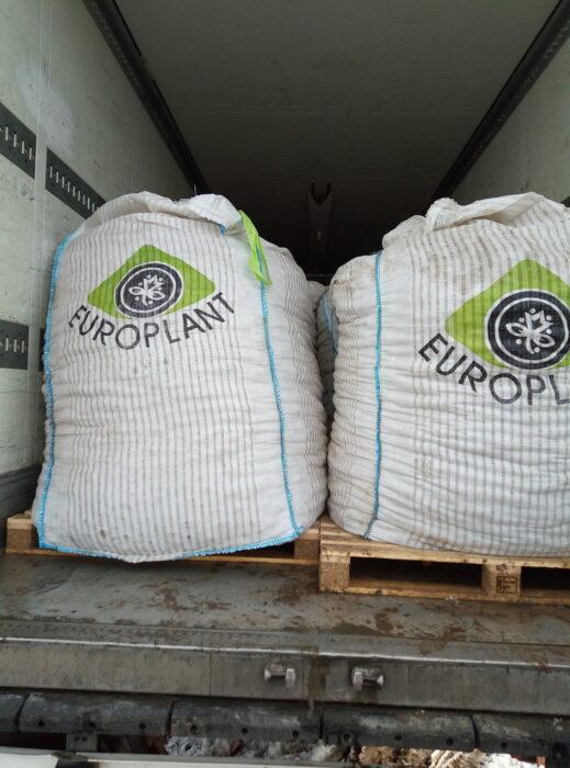 В Оренбуржье уничтожили 60 тонн санкционного картофеля