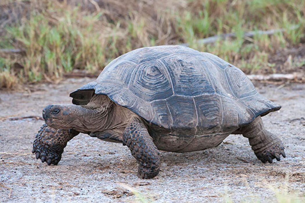 Черепахи, ириска, арест Джордано Бруно и «Сияние». День в истории