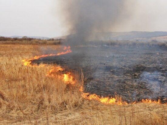 В Илекском районе рабочие развели костер и сожгли поле