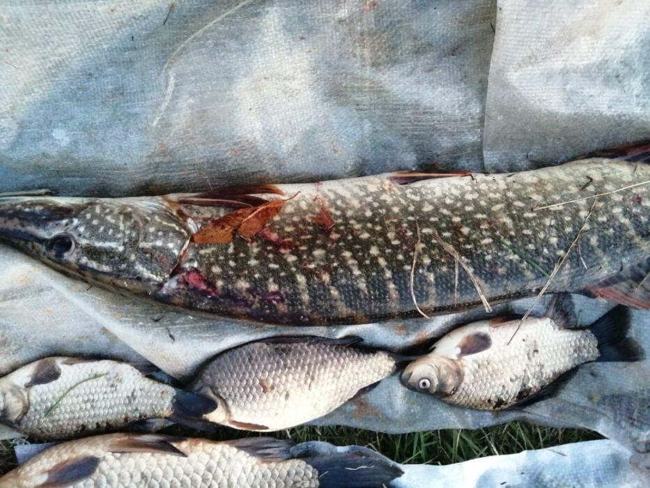 На Ириклинском водохранилище задержан браконьер