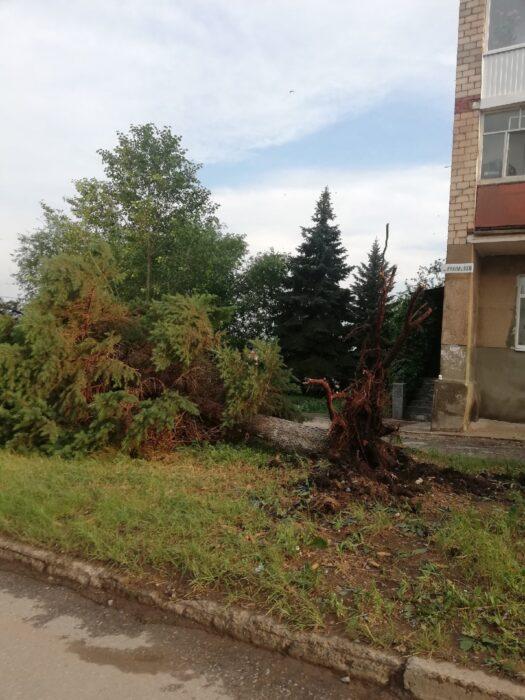 В Оренбуржье ветер с корнями вырывал деревья
