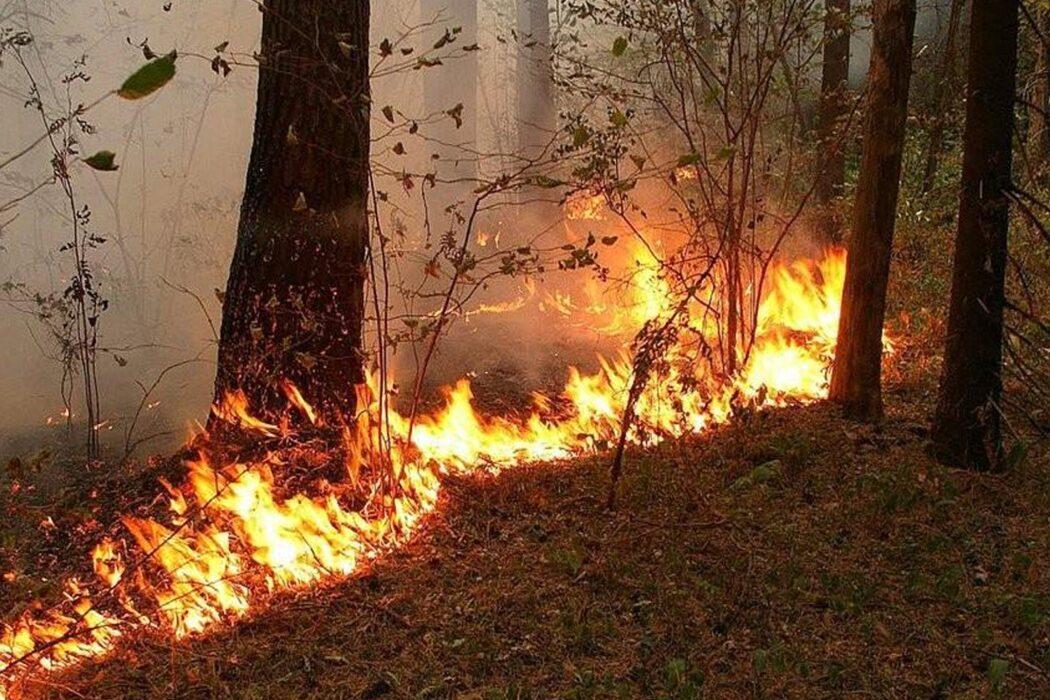 В Оренбуржье растет число пожаров