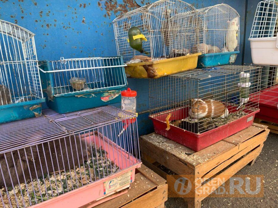 В Оренбуржье могут запретить продажу животных на рынках и в зоомагазинах