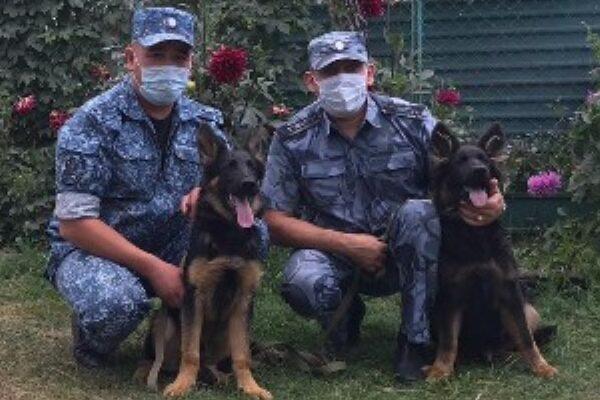 В колониях Оренбуржья появились новые служебные собаки